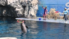 Dolphin show in the Safari World. Bangkok, Thailand - stock footage