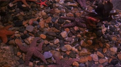 Star fish in clear water Stock Footage