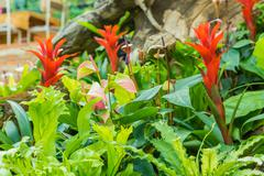Ornamental flowers in a greenhouse. Stock Photos