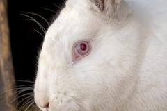 Portrait of the white rabbit Kuvituskuvat
