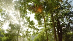 Rays of Sunshine Filtering through Smoke in a Tropical Wilderness Stock Footage
