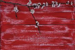 Wooden red background with a branch of cherry blossoms - stock photo