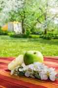 Green apple with a branch of a blossoming apple-tree Stock Photos