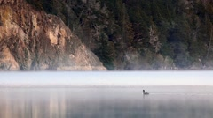 Foggy morning scene of a heron Lake submerging and fishing Stock Footage