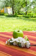 Green apple with a branch of a blossoming apple-tree - stock photo