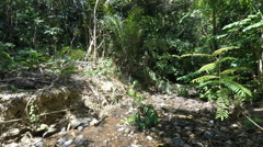 Jungle on ko lanta Stock Footage