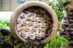 Lingzhi mushrooms Stock Photos