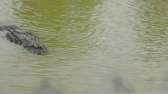 Alligator in swamp swimming toward camera Stock Footage