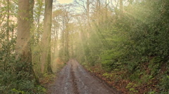 Evening sunlight shines through trees unto a forest road in Germany Stock Footage