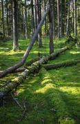 Damaged wood pests and fallen trees in the forest - stock photo