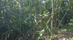 Green jungle of ko lanta in thailand Stock Footage