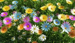 Flowers of different colors, in a grass field. - stock illustration