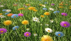 Flowers of different colors, in a grass field. Stock Illustration