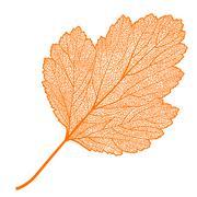 manually drawn leaf skeleton - stock illustration