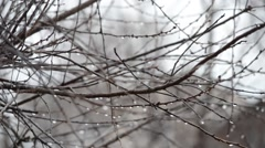The bare branches under the spring rain Stock Footage