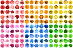 Mega pack of 150 in 1 natural and surreal blue, yellow, red, pink, green and  - stock photo