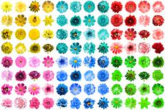 Mega pack of 96 in 1 natural and surreal blue, yellow, red, green, turquoise  - stock photo