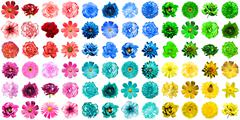 Mega pack of 72 in 1 natural and surreal blue, yellow, red, green, turquoise  - stock photo
