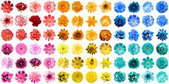 Mega pack of 72 in 1 natural and surreal blue, yellow, red, orange, turquoise Stock Photos