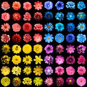Mega pack of 64 in 1 natural and surreal blue, yellow, red and pink flowers i - stock photo
