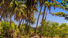 High Palms against Tropical Plants in Fairy Stream Park Stock Footage