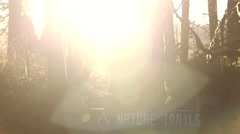 Golden Sunlight Shining on a Nature Trail - stock footage