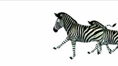 4k Group zebras horse donkeys animal silhouette migration run,Africa grassland. - stock footage