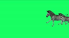 4k Group zebras horse donkeys animal silhouette migration run,Africa grassland. Stock Footage