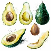 Watercolor avocado set - stock illustration