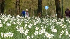 4K UHD Elderly Senior women walking leisurely in park Stock Footage