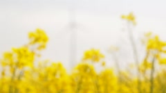 windmills rotating during windy spring cloudy day on yellow field - stock footage