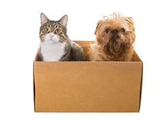 Cat and the dog sitting in a cardboard box - stock photo