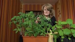 Woman nerd. Home greenhouse, new varieties of vegetable crops Stock Footage