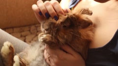 Girl stroking a cowardly rabbit Stock Footage