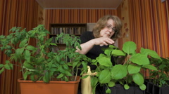 Woman nerd. Home greenhouse, new varieties of vegetable crops - stock footage