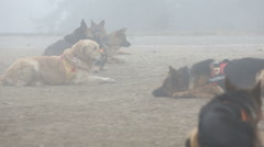 Search and rescue dogs - stock footage