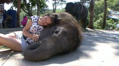 Very friendly and trusting a baby elephant. - stock footage