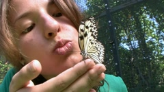 Colorful butterflies can be friendly and trusting. - stock footage