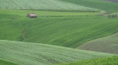 Wind over wheat fields and hills of Molise Stock Footage