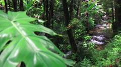 Deep in theTropical jungle , stream and foliage - stock footage