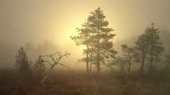 Mist rising from the bog. Foggy marshland in early morning before sunrise. Stock Footage