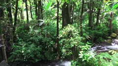 Pan right,Tropical jungle stream and foliage Stock Footage