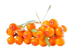 beautiful abundance twig of sea buckthorn berries is isolated on white backgr - stock photo