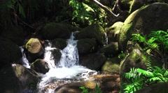 Tropical jungle stream and foliage, tilt up Stock Footage