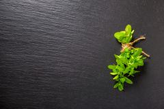 top view of beautiful bunch fresh green mint on slate background, close up - stock photo