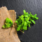 beautiful bunch fresh green lemon mint tied twine on slate and burlape backgr - stock photo