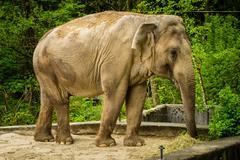 Big Elephant animal - stock photo