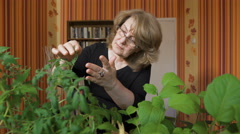portrait of a woman biologist. It is home to grow new varieties of vegetables - stock footage