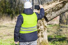 Worker with smart phone near fallen tree - stock photo