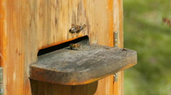 Bees flying into beehive. Zoom in shot Stock Footage